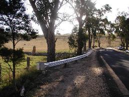 Guard rail too short to shield tree.